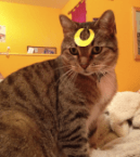 sailor moon cat