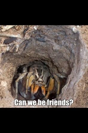 spider wants to befriends