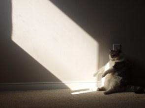 Zombie cat nap