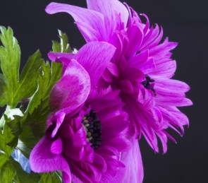 purple flower things