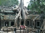 Incredible tree in Cambodia's Ta Prohm temple
