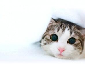 Kitty, Kitty…