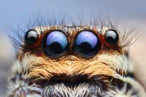 Suprised Spider