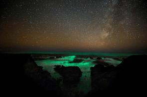 Bioluminescent plankton under the stars
