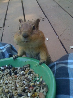 chipmunk and nuts