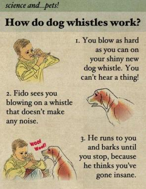 dog whistle 101