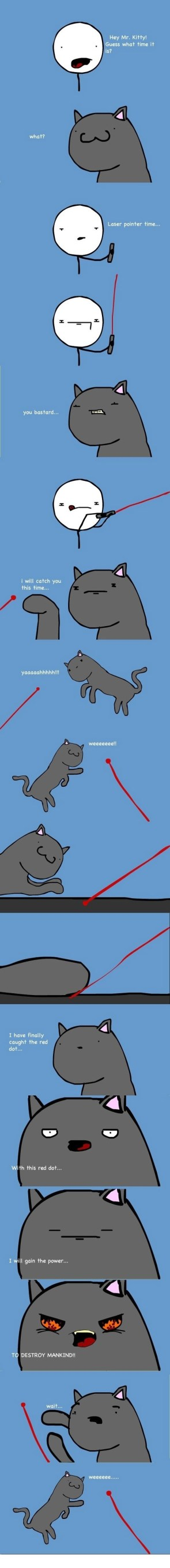 Laser pointer cat