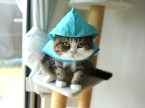 cat wears a raincoat