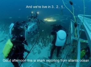 Shark reporting