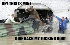 horse wants it boar back
