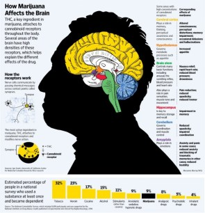how cannabis affects the brain