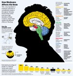 how-cannabis-affects-the-brain.jpg