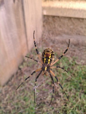 The new bug in my yard.