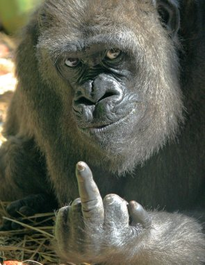 One Gorilla's opinion