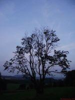 nightly_tree_and_sky.jpg