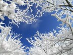Snowy wallpapers