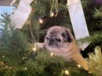"""And a Pugggg in a tree"""