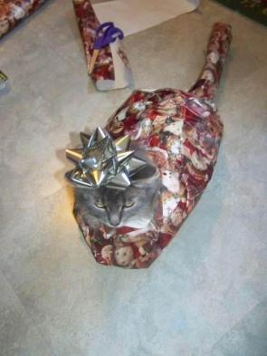 How to wrap a cat