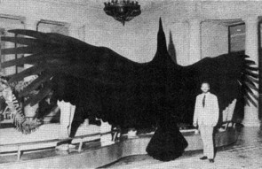 Big fuckin bird