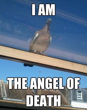 Angry god pigeon