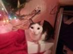 My kitty and tree