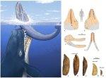 Livyatan-whale-312_n.jpg