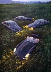 Lurking Jaguars