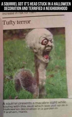 Terror Squirrel