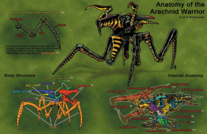 bug anatomy