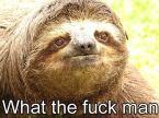 WTF sloth