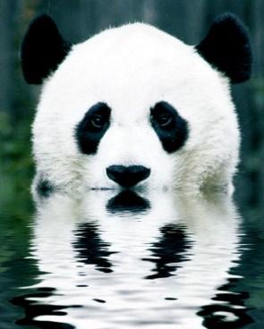 Pandaflection