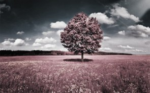 Lone tree wallpapers