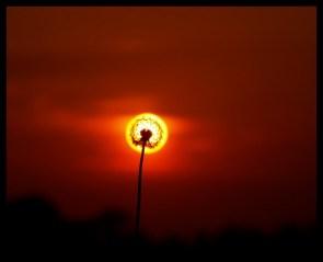 Dandeclipse