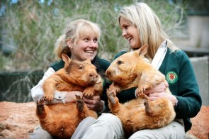 Wombat erections