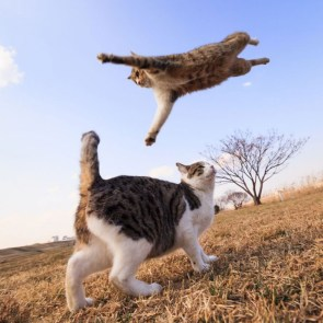 Because cats can fly