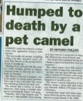 Humped to death by pet camel