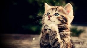 Pretty Kitty Please