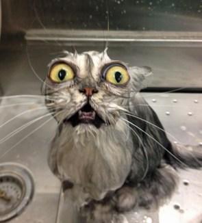 trauma cat