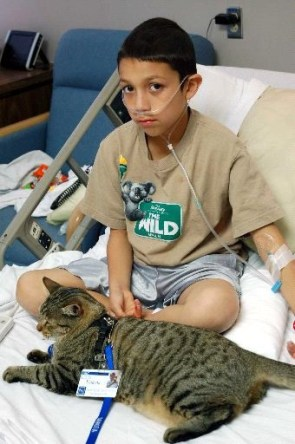 Cat Service Animal