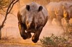 air rhino