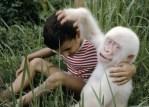 albino-gorilla-e1375842114126.jpg