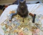 cat is gangsta