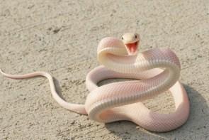 snake joy
