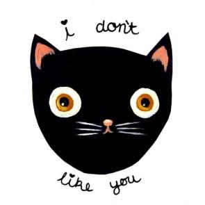 cat dont like