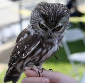 evil genius owl