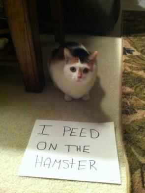 shamed cat