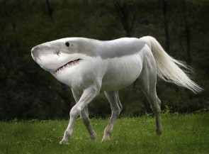 sharkhorse