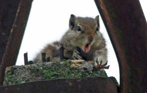 Shocked Squirrel