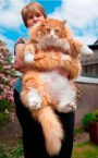 Large pets