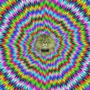 All Hail Hypno-Cat!